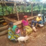 BURUNDI : Une porcherie, une chèvrerie avec PRO-ACT1, RURANGA à BUKEMBA / RUTANA