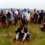 BURUNDI : TRAVAUX DE DEVELOPPEMENT COMMUNAUTAIRE -  Planter 12.000 plants d'eucalyptus à RUTEGAMA / MURAMVYA