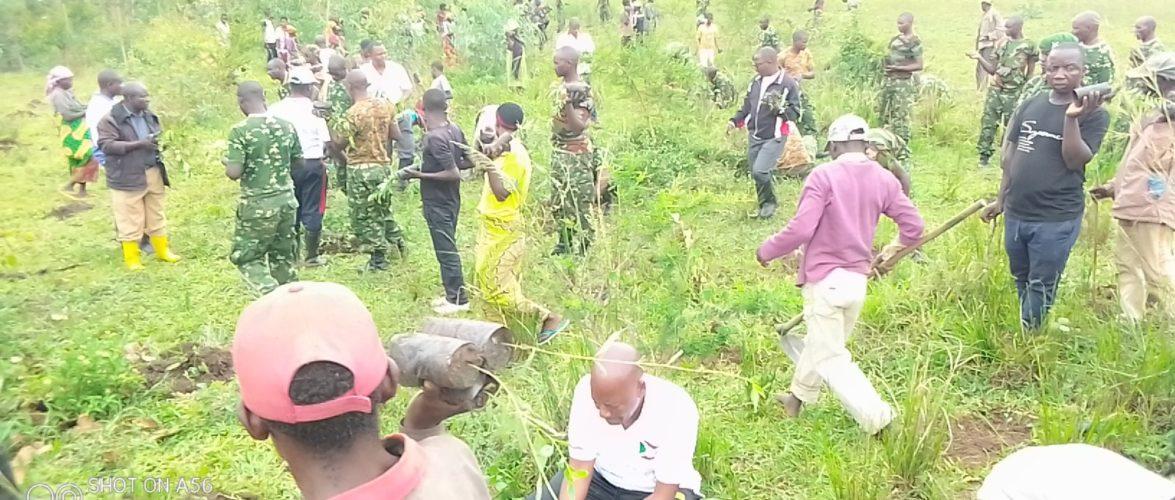 BURUNDI : TRAVAUX DE DEVELOPPEMENT COMMUNAUTAIRE – 6.000 arbres plantés sur la colline MUDUBUGU, GIHANGA / BUBANZA