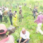 BURUNDI : TRAVAUX DE DEVELOPPEMENT COMMUNAUTAIRE - 6.000 arbres plantés sur la colline MUDUBUGU, GIHANGA / BUBANZA