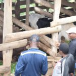 BURUNDI : Visite d'une ferme de taureaux à NDORA, BUKINANYANA / CIBITOKE