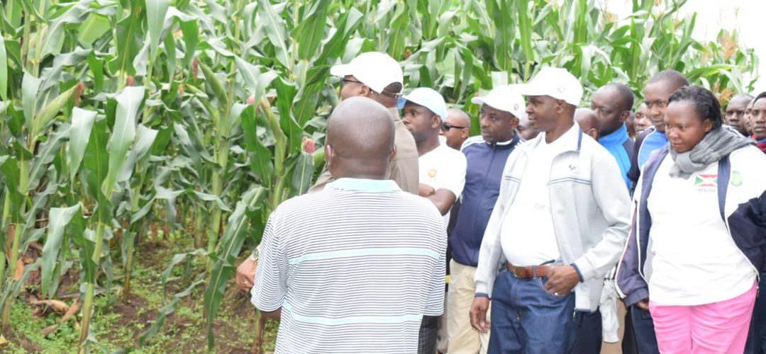 BURUNDI : Un champ de maïs d'une superficie de 11 ha à RABIRO / KAYANZA