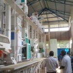 BURUNDI : L'usine SOREMU à MUHANGA crée des emplois et produit du riz / KAYANZA