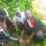 BURUNDI : TRAVAUX DE DEVELOPPEMENT COMMUNAUTAIRE - Planter des bambous sur la rivière KANYAMIGOGO / BUBANZA