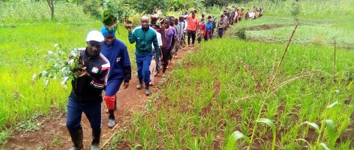 BURUNDI : TRAVAUX DE DEVELOPPEMENT COMMUNAUTAIRE – Planter 6.000 arbres à SAGARA, commune MUTUMBA / KARUSI