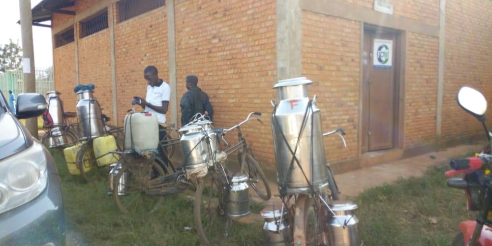 BURUNDI : TEZIMBERUBWOROZI produit entre 1000 l et 1500 l de lait par jour à MUHANGA / KAYANZA