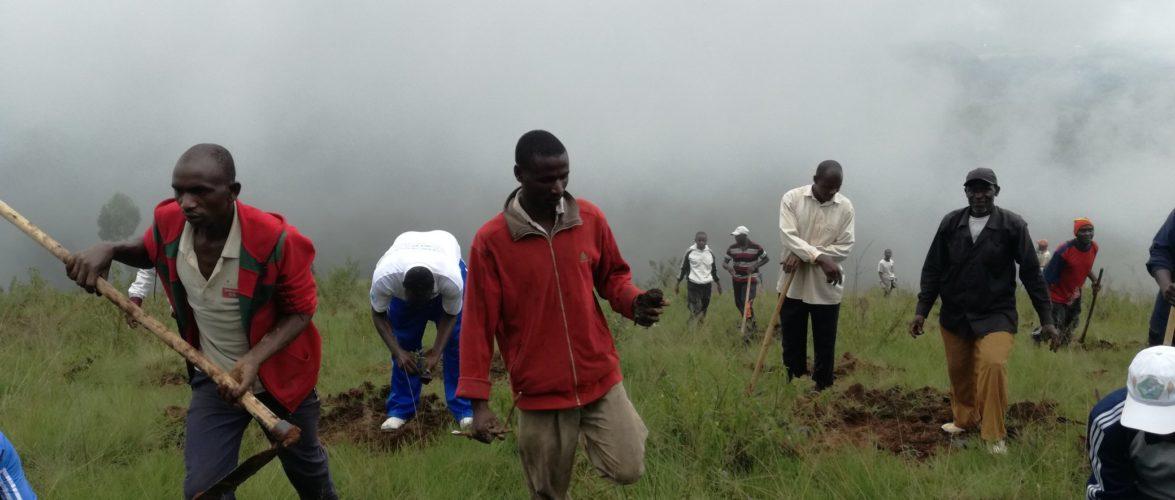 BURUNDI : TRAVAUX DE DÉVELOPPEMENT COMMUNAUTAIRE – Planter des arbres sur des montagnes dénudées de MATANA / BURURI