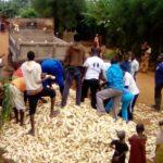 BURUNDI : TRAVAUX DE DEVELOPPEMENT COMMUNAUTAIRE - Récolte de 3 tonnes de maïs dans un champ de la commune KIRUNDO