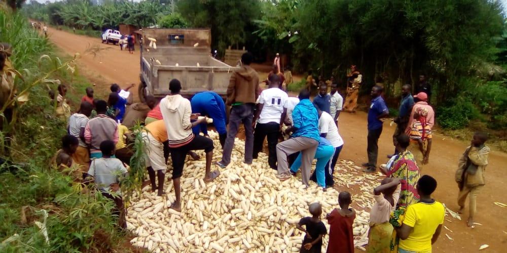BURUNDI : TRAVAUX DE DEVELOPPEMENT COMMUNAUTAIRE – Récolte de 3 tonnes de maïs dans un champ de la commune KIRUNDO