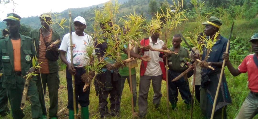 BURUNDI : TRAVAUX DE DEVELOPPEMENT COMMUNAUTAIRE – Planter des bambous aux bords de la rivière MPANDA à MUSIGATI / BUBANZA