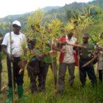 BURUNDI : TRAVAUX DE DEVELOPPEMENT COMMUNAUTAIRE - Planter des bambous aux bords de la rivière MPANDA à MUSIGATI / BUBANZA