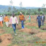 BURUNDI : ODECA -  Travaux d'extension de champs de caféiers sur 19 ha à NTAGITIKA / RUYIGI
