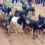 BURUNDI : Les IMBONERAKURE de GIHOGAZI appuient les projets socio-économiques locaux / KARUSI