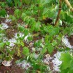 BURUNDI : La neige est tombée à MUTUMBA / KARUSI