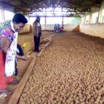 BURUNDI : Visite des coopératives locales à KAYOKWE / MWARO