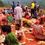 BURUNDI : La coopérative SANGWE de GIKUNGERE égraine sa bonne récolte de maïs / KAYANZA