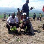 BURUNDI :  6.203 eucalyptus planté en colline KIBANGU à BUBANZA