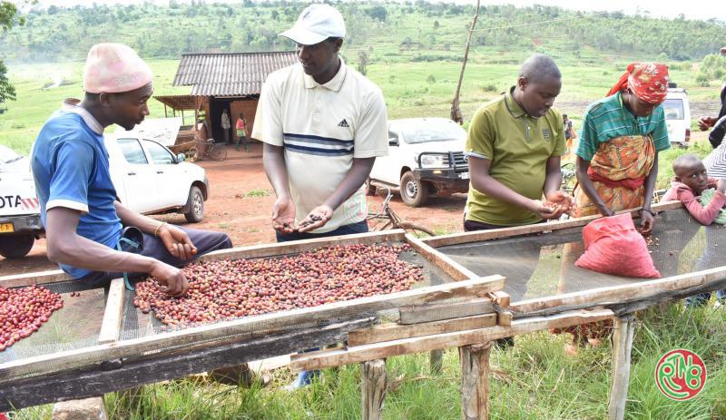 ODECA: Les perspectives de la filière café s'annoncent prometteuses
