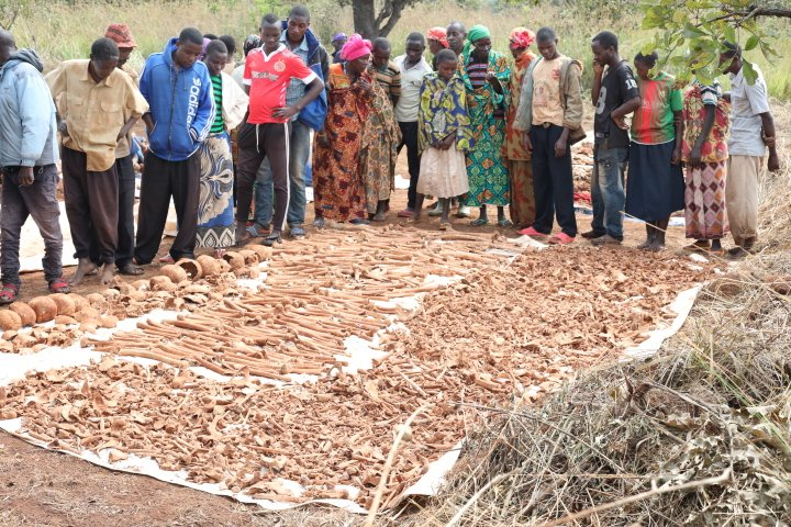 GENOCIDE CONTRE LES HUTU DU BURUNDI EN 1972 : 4 fosses communes avec 200 corps à KIYANZA, MWAKIRO / MUYINGA