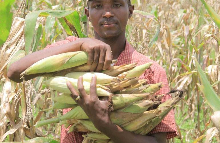 BURUNDI : Un champ avec des récoltes destinées aux nécessiteux à MISHIHA/ CANKUZO