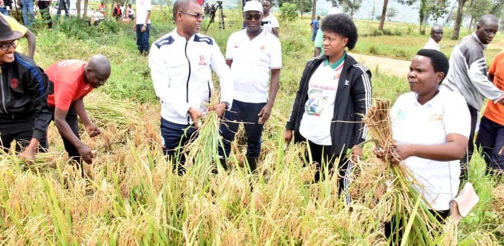 BURUNDI : TRAVAUX DE DEVELOPPEMENT COMMUNAUTAIRE – Récolter 15 tonnes de riz en colline KANSESA à BUGANDA / CIBITOKE