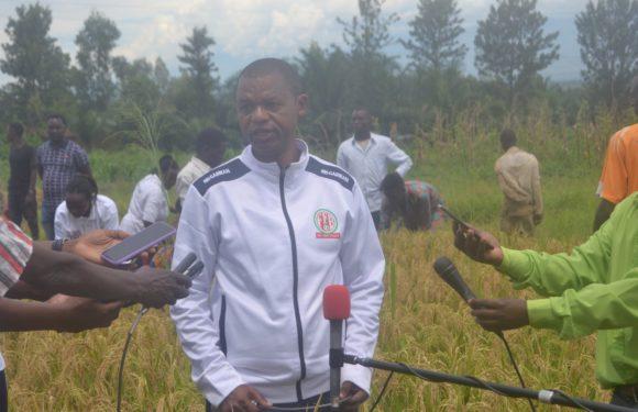 BURUNDI : Le Président du SENAT demande de fixer le prix du riz non décortiqué au kilo / CIBITOKE