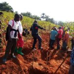 BURUNDI : TRAVAUX DE DEVELOPPEMENT COMMUNAUTAIRE - Tracer des courbes de niveau à BUTAVUKA, RUGAZI / BUBANZA