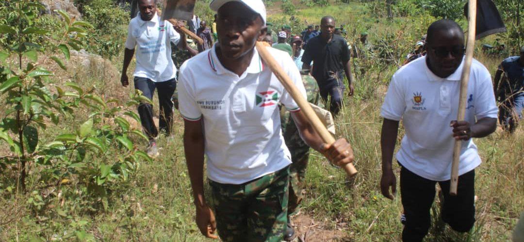 BURUNDI : TRAVAUX DE DEVELOPPEMENT COMMUNAUTAIRE – Sarclage autour des arbres plantés en colline MAKANO / CANKUZO