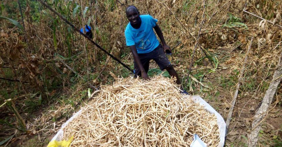 BURUNDI : 80 kg produits avec 1,5 kg de haricots semés sur 2,5 ares / BUBANZA