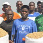 BURUNDI : TRAVAUX DE DEVELOPPEMENT COMMUNAUTAIRE - Récolter du riz en zone BUTERERE, NTAHANGWA / BUJUMBURA