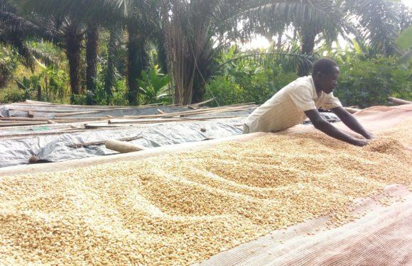 BURUNDI : Les caféiculteurs à GITAZA travaille avec la coopérative TEZIMBERE IKAWA / RUMONGE