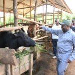 BURUNDI : Visite d'une exploitation agropastorale à MPANDA / BUBANZA