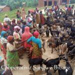 BURUNDI : Les éleveurs de la  coopérative SANGWE en colline BIBARE, ISARE / BUJUMBURA