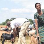 BURUNDI : Don de chèvres à des familles paupérisées à GISAGARA / CANKUZO