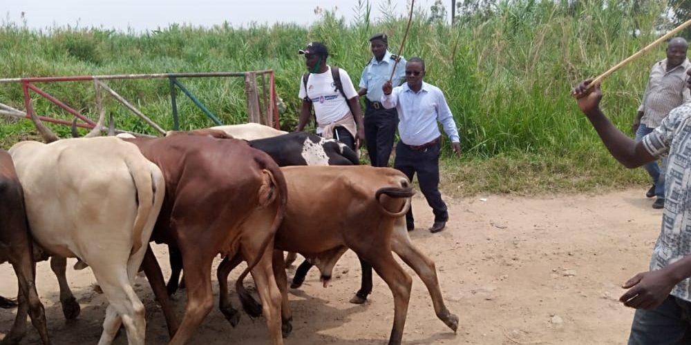 BURUNDI : Remise à GATUMBA de 8 vaches volées en RDC aux autorités congolaises / BUJUMBURA