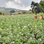 BURUNDI : Bonne santé de 10 coopératives SANGWE sur 11 à MUKIKE / BUJUMBURA