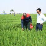 Le Président Ndayishimiye mobilise le secteur de l'agro-élevage