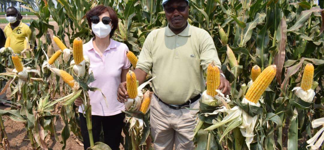 BURUNDI / CHINE : Visite du Centre Pilote Agricole de GIHANGA, BUBANZA