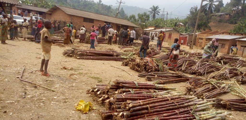 BURUNDI : La canne à sucre des vallées de MUSIGATI / BUBANZA