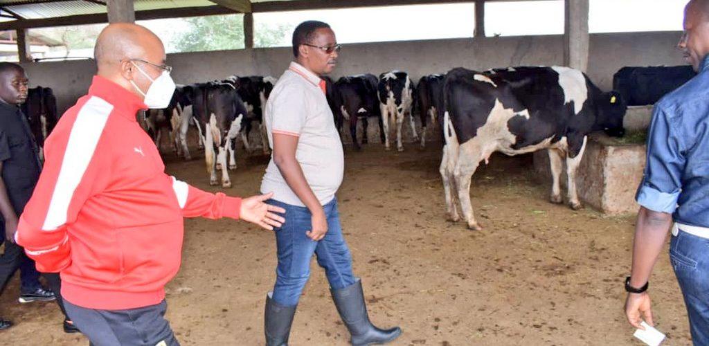 BURUNDI : Visite de la ferme GREEN FARM à GIHANGA / BUBANZA