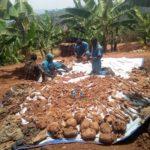 GENOCIDE CONTRE LES BAHUTU DU BURUNDI DE 1972 : 337 corps exhumés de fosses communes à RWASAZI / MURAMVYA