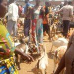 BURUNDI : Les éleveurs poussés à l'élevage en stabulation à BUGANDA / CIBITOKE