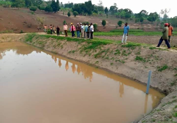BURUNDI : Du poisson en colline SHORE à GITOBE / KIRUNDO